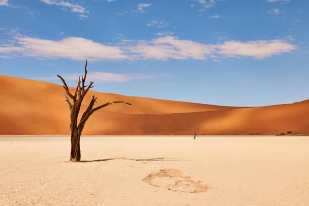 Namibian desert landscape beautiful landscate in the Namib desert at Deadvlei namib desert stock pictures, royalty-free photos & images