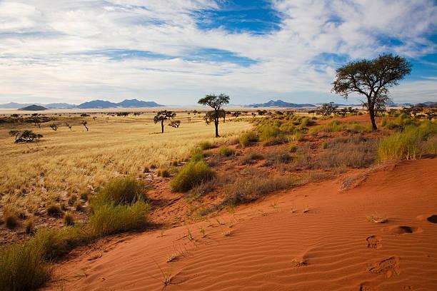 reservat duenen - afrikanische steppe dürre stock-fotos und bilder