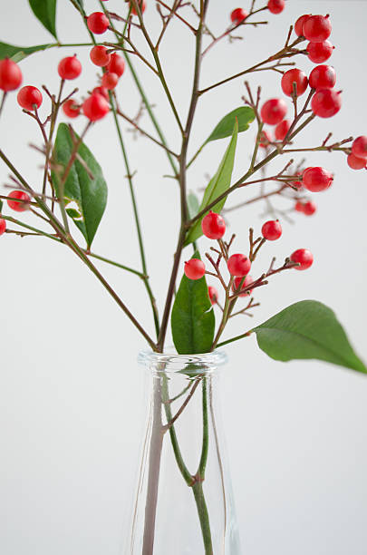 Nandina in glass vase stock photo