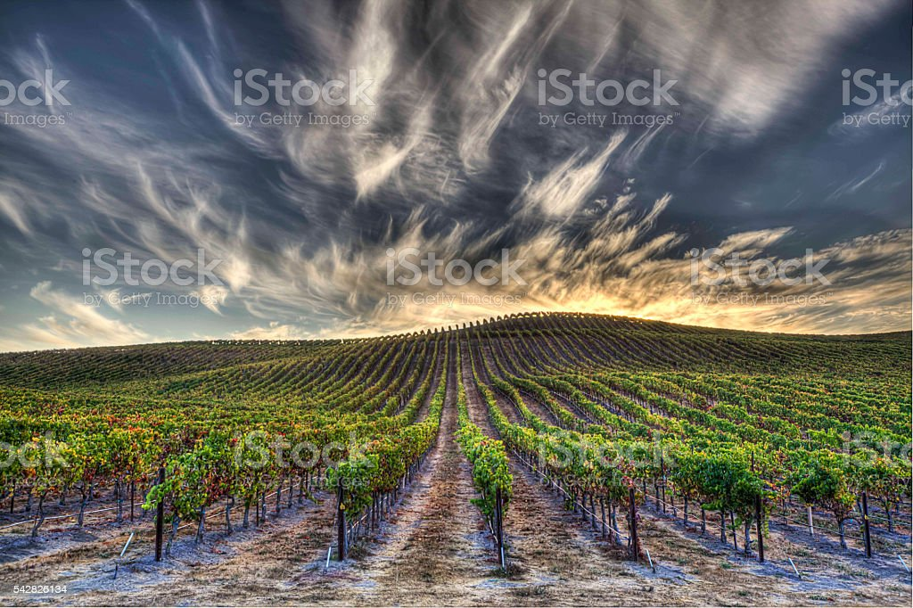 Napa Valley Ca. Sunrise stock photo