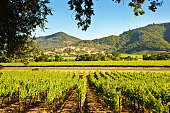 The vineyard and winery in Sonoma valley, California. The wine industry and agri-business in California.