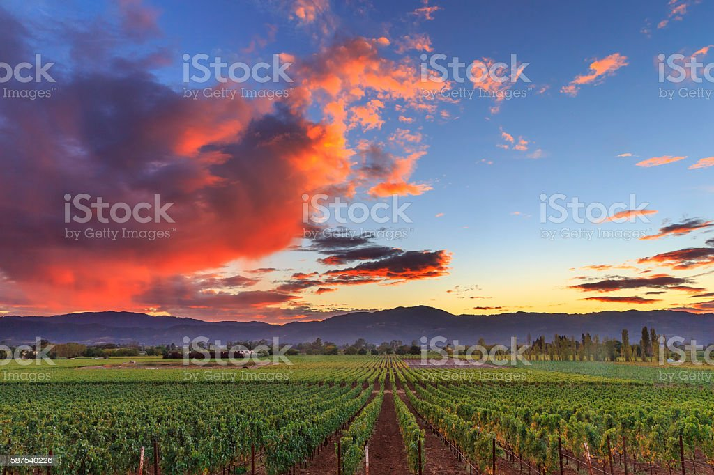Napa Valley California Vineyard landscape Sunset stock photo