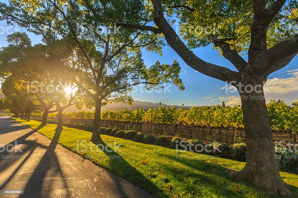 Napa Vineyard Tours Free