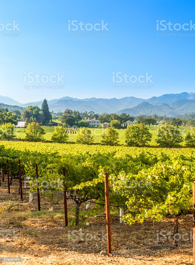 Napa Valley in the Summer stock photo