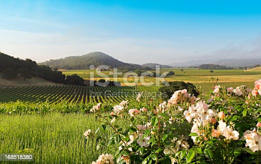Napa Valley in spring as the sun rises over the beautiful landscape.