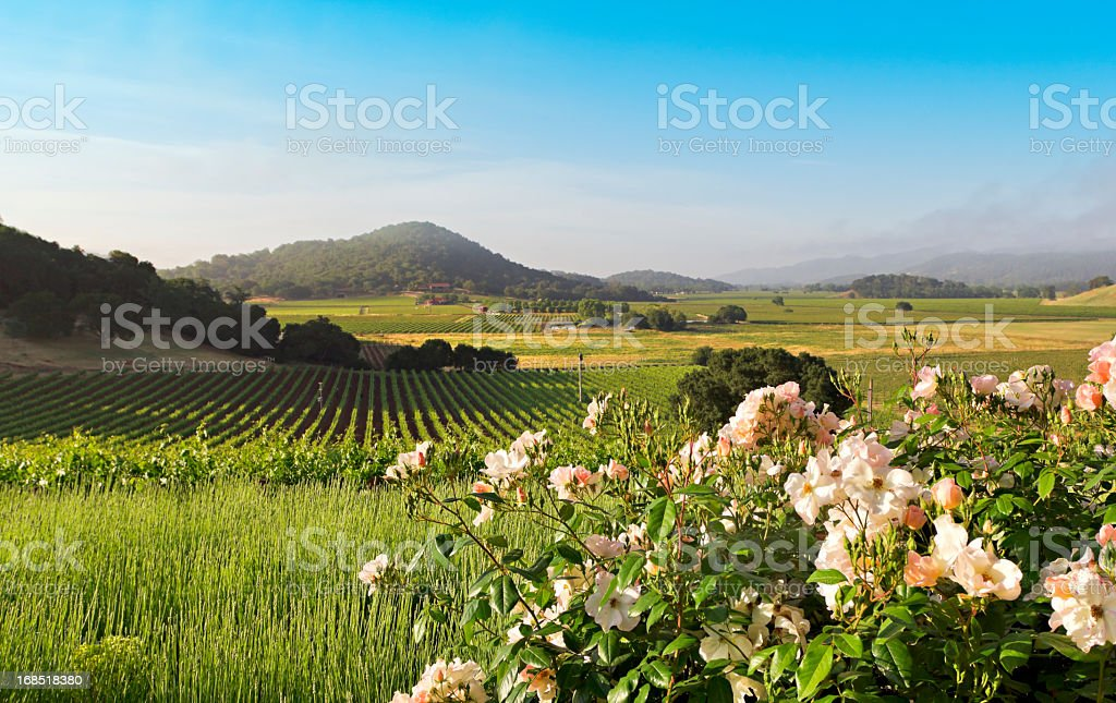 Napa Valley landscape in spring stock photo