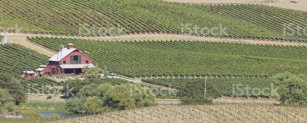 Napa Valley Landscape royalty-free stock photo