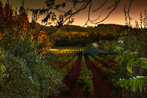 Napa Valley At home in Napa sonoma stock pictures, royalty-free photos & images