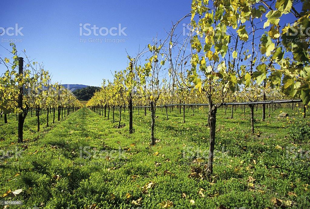 Napa Valley Vines royalty-free stock photo