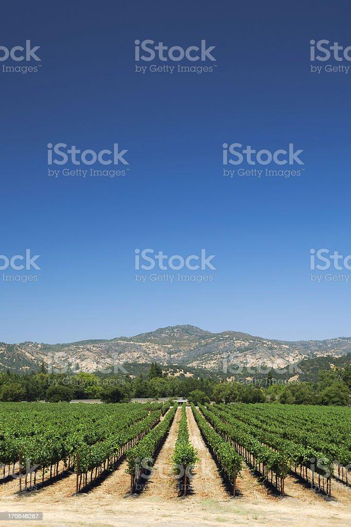 Napa valley vineyard royalty-free stock photo
