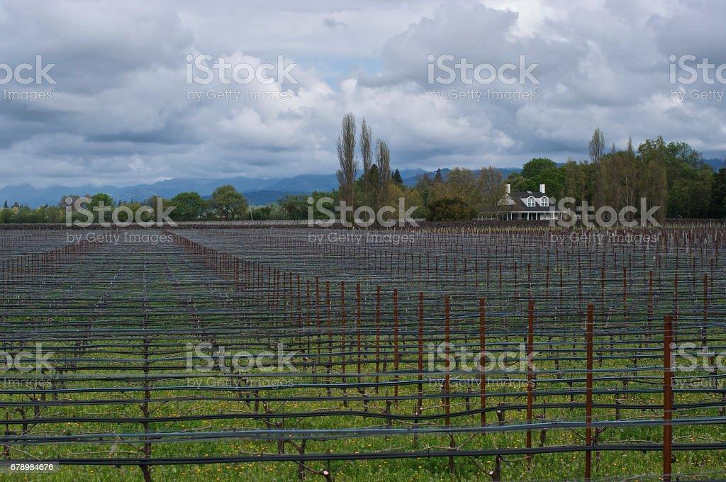 Vignobles de la Napa Valley photo libre de droits