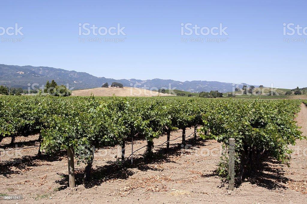 Napa Valley vineyard scenic landscape royalty-free stock photo