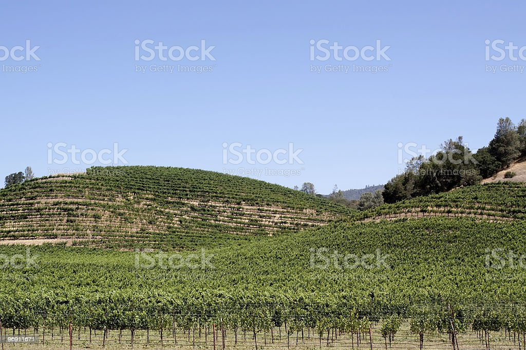 Napa Valley vineyard scenic landscape royalty-free stock photo