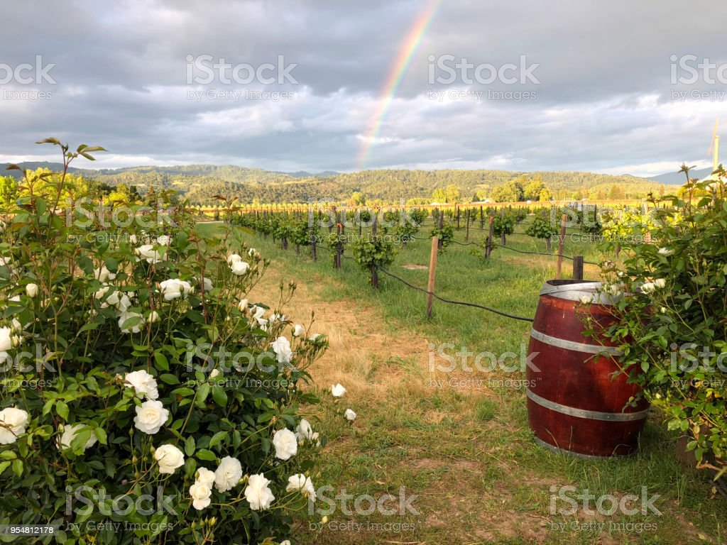 Napa Valley vineyard with a rainbow in the background stock photo
