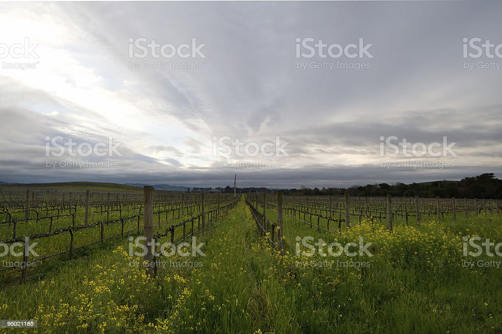 Napa Valley Vineyards royalty-free stock photo
