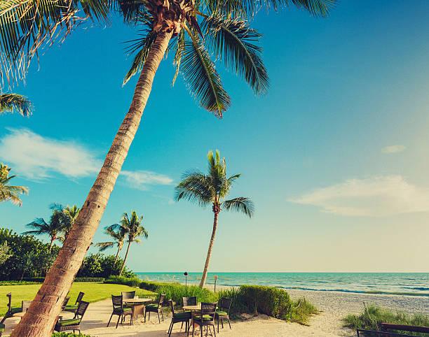 naple beach palms naple beach - florida - afternoon scene naples florida stock pictures, royalty-free photos & images