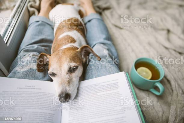 Napping dog and book perfest relaxed cozy weekend hot tea and book picture id1132974956?b=1&k=6&m=1132974956&s=612x612&h=iqmbj5kzsoepn5kq0ri18jrb8x9ovs89zpjbzv8abqg=