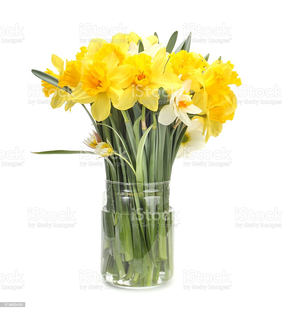 narcissus flower bouquet stock photo