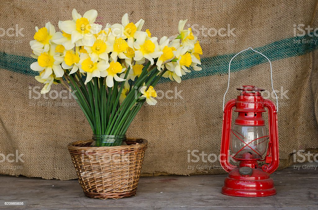 Papyraceus flor  foto royalty-free