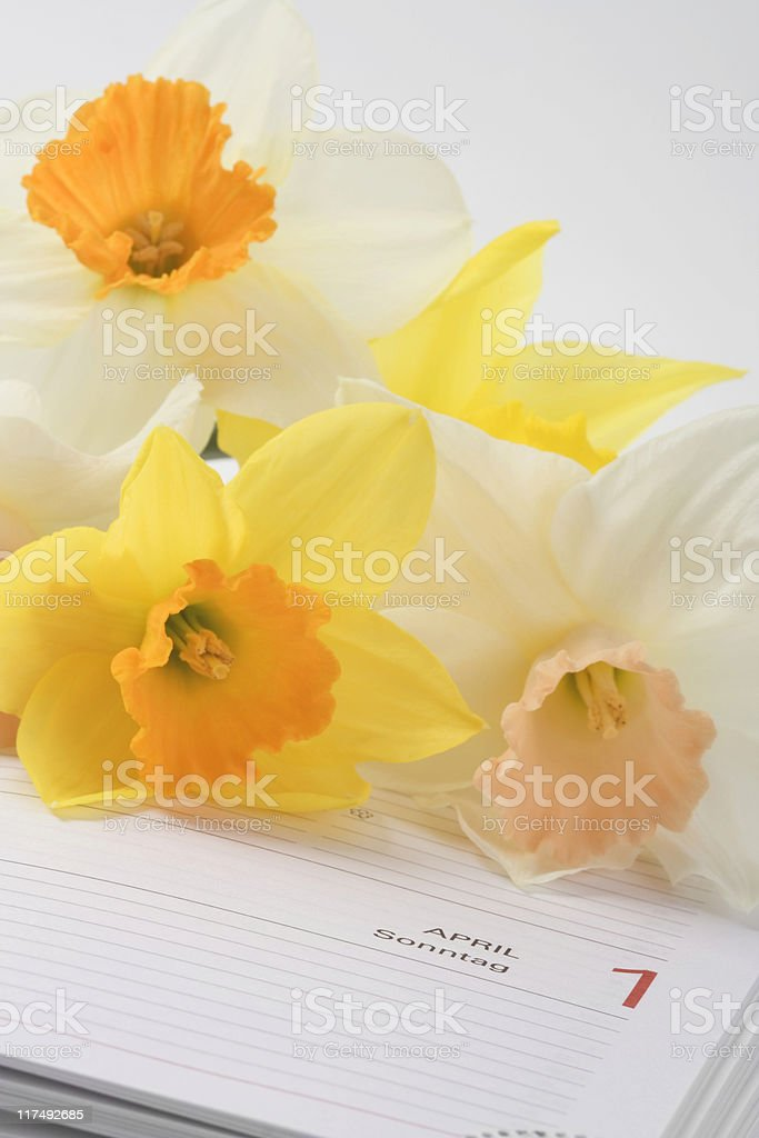 narcissus flowers and diary royalty-free stock photo