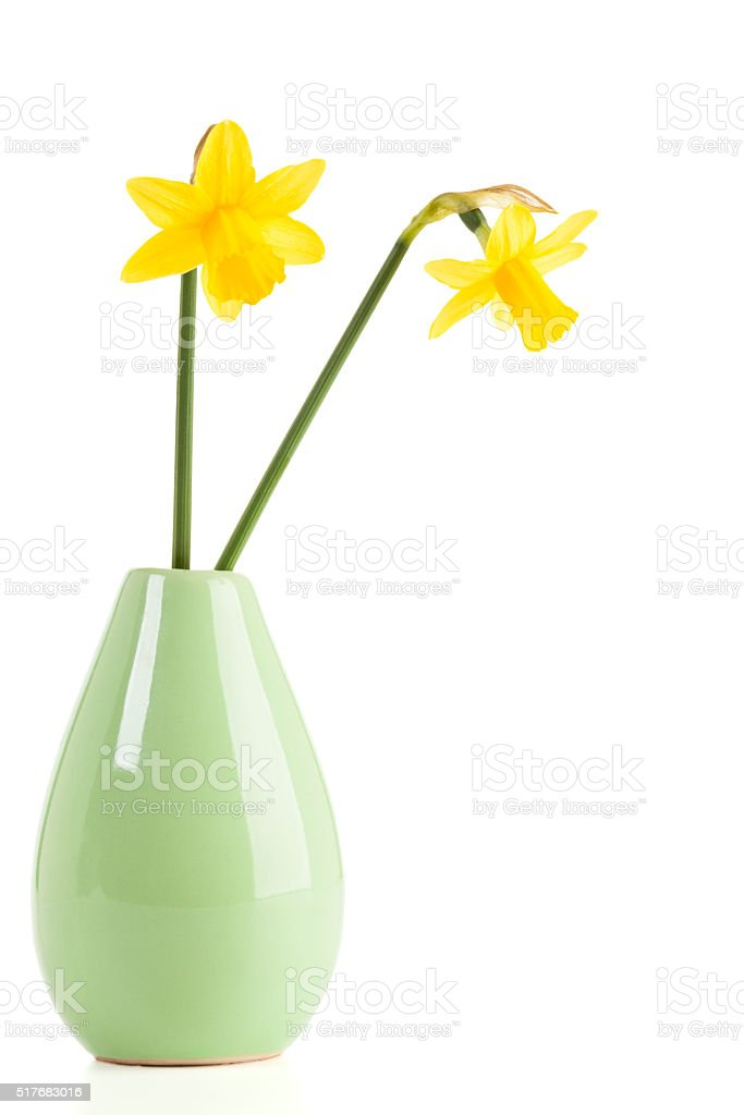 Narcissus flowers in vase isolated stock photo