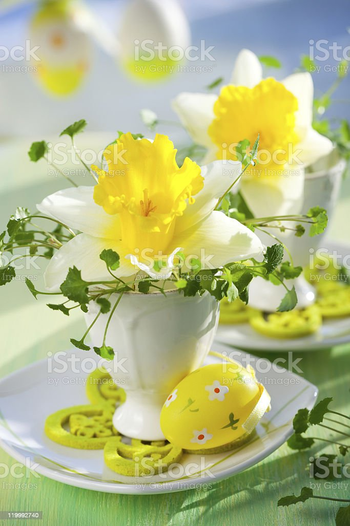 narcissus  in eggcups royalty-free stock photo