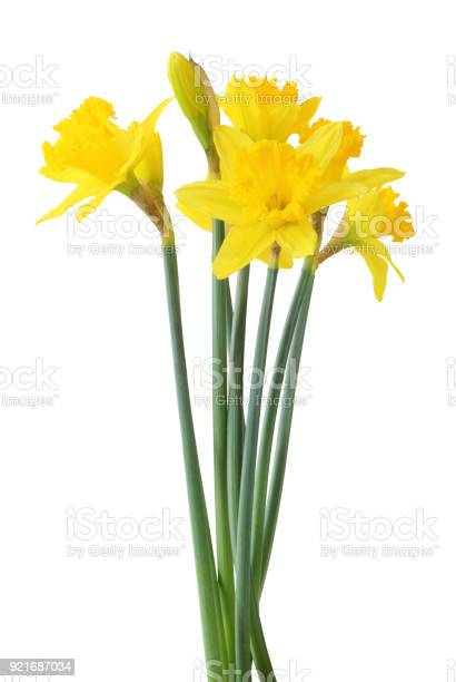 Narcissus isolated on white background inclusive clipping path picture id921687034?b=1&k=6&m=921687034&s=612x612&h=dzym90quts6pox8v wodeuq xt9gejt3gth2huf9fzy=