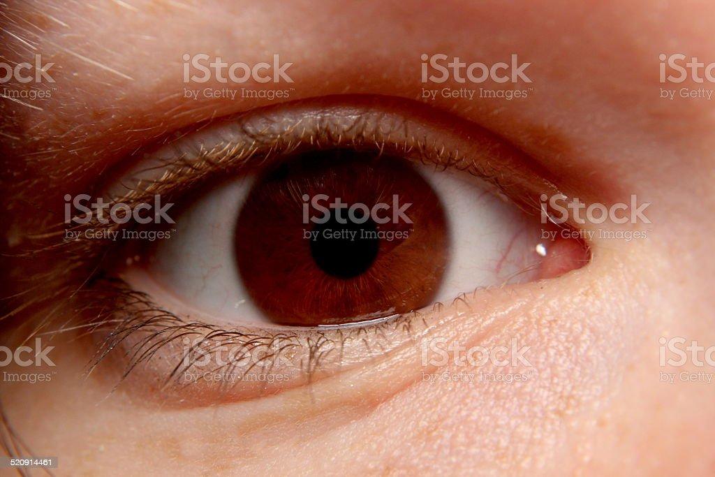 Narrow Brown Eye Close-Up stock photo