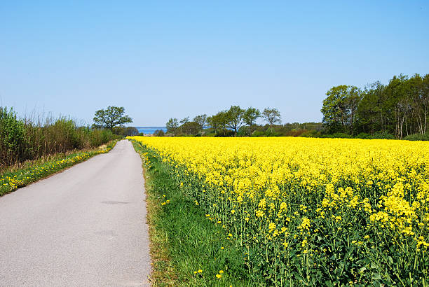Narrow country road at spring stock photo
