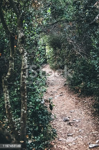 Narrow footpath surrounded by trees and bush, leading to destination.