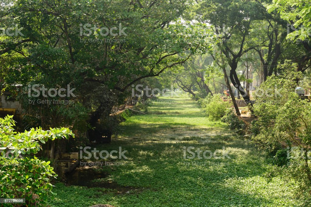 Narrow green water channels Alleppey stock photo