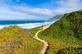 A path winds through the landscape above Garrapata  Beach along the California`s Big Sur coast