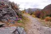 A narrow mountain trail running along the rocky slope of the mountain along the stones overgrown with purple flowers. Altai, Siberia, Russia.