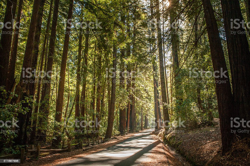 Narrow Park Road Through Redwood Trees, Big Basin State Park stock photo