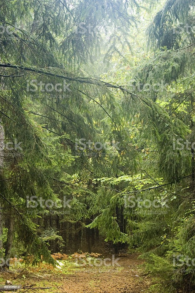 Narrow path in forest royalty free stockfoto