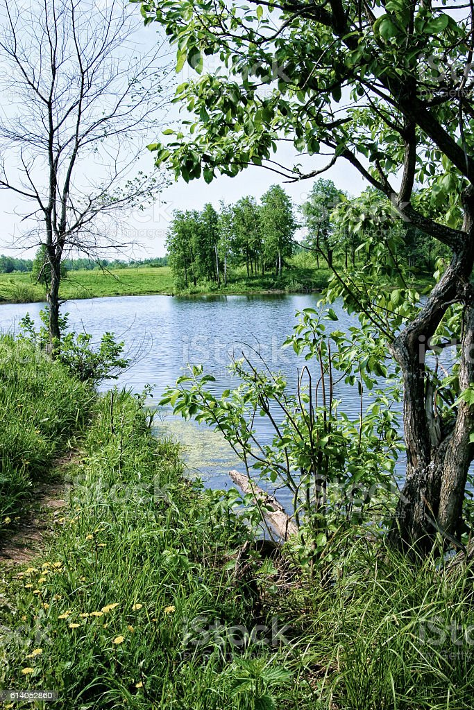 Narrow path leading to the pond on the nature stock photo