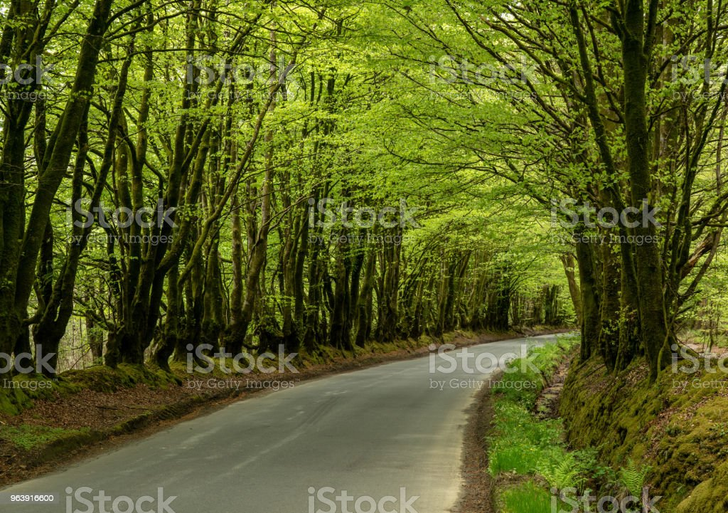 Narrow road between overhanging trees forming a tunnel - Royalty-free Beauty Stock Photo