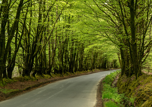 Narrow Road Between Overhanging Trees Forming A Tunnel Stock Photo - Download Image Now