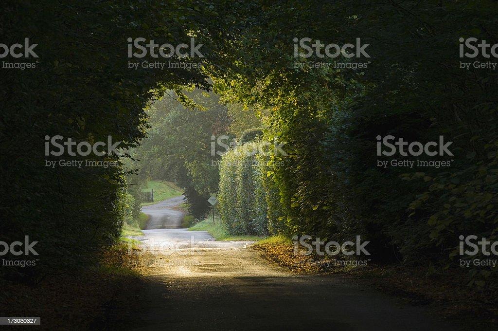 Narrow road under trees stock photo