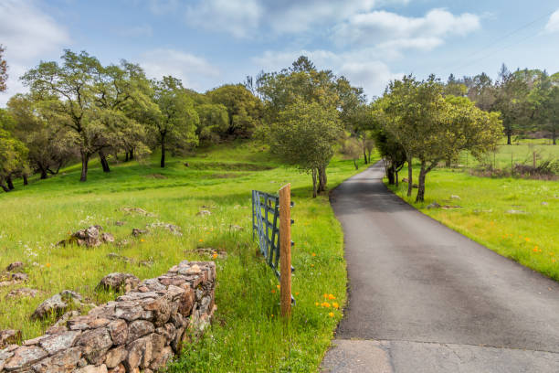 Narrow road with trees gate & wall stock photo