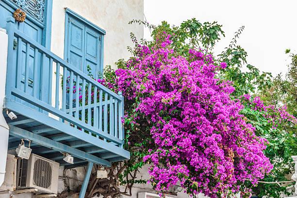 Narrow street with flower decorated homes in mykonos greece picture id585810512?b=1&k=6&m=585810512&s=612x612&w=0&h=fq kuegegjpahs3cslpon8tg72fz4v3wxqkqjsqcfli=