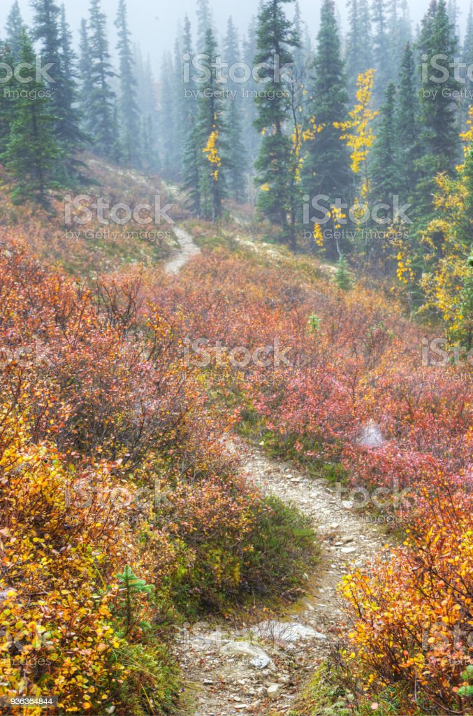 A narrow trail winds through Blueberry Bushes with red leaves in Denali National Park. stock photo