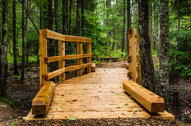 narrow wooden bridge - pinaceae stock photos and pictures