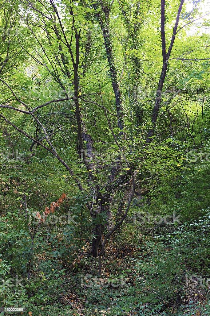 Narure landscape. royalty-free stock photo
