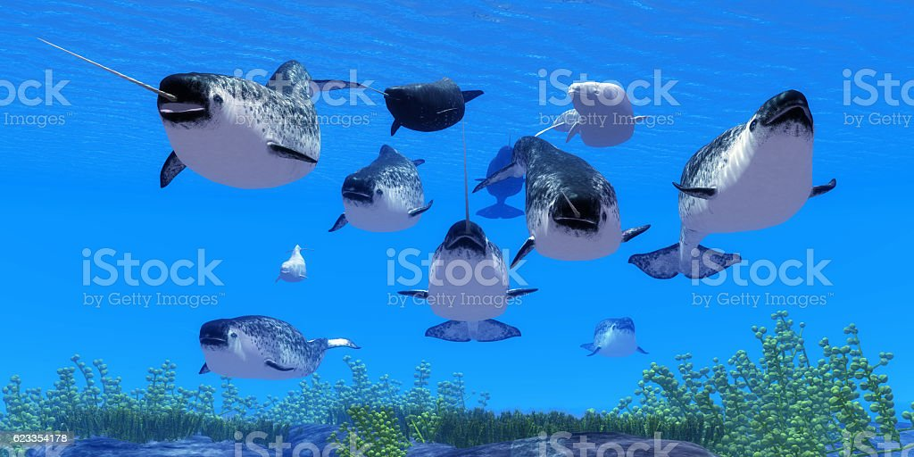 Narwhal Whales stock photo