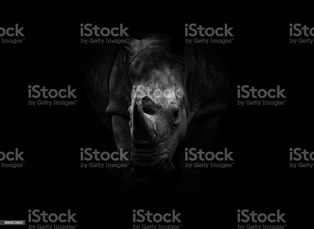 Nashorn – Foto