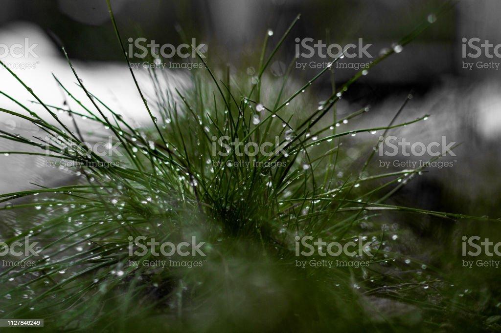 Nasses Grasbüschel – Foto