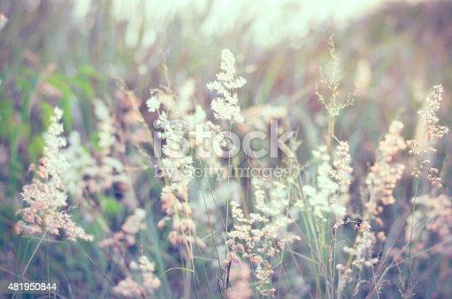 istock Natal grass background 481950844