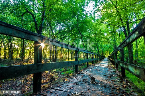 Sunrise On A Hiking Tail Natchez Trace Parkway, Tupelo, Mississippi. The Natchez Trace, also known as the
