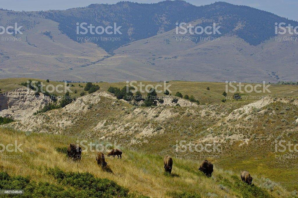National Bison Refuge stock photo
